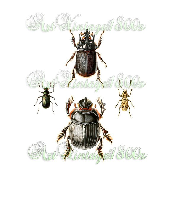 AWESOME INSECT-001 Beetles vintage print