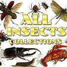 INSECTS Collections 1-54 with 9700 vintage print