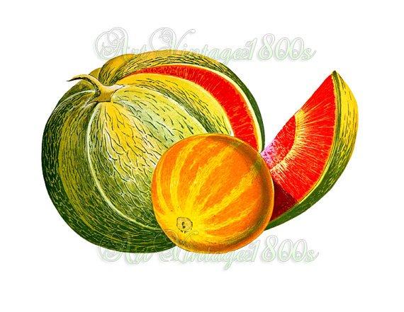 JUICY FRUIT-002 Melons vintage print