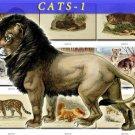 CATS-1 50 vintage print