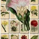 FLOWERS-93 243 vintage print