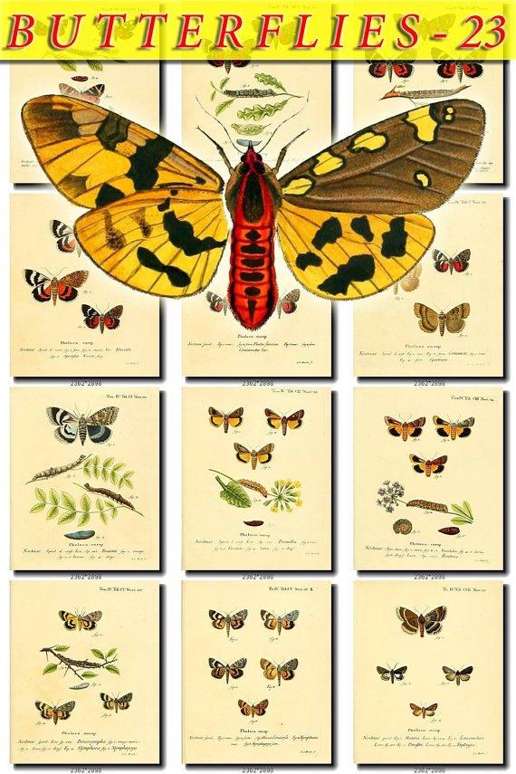 BUTTERFLIES-23 70 vintage print