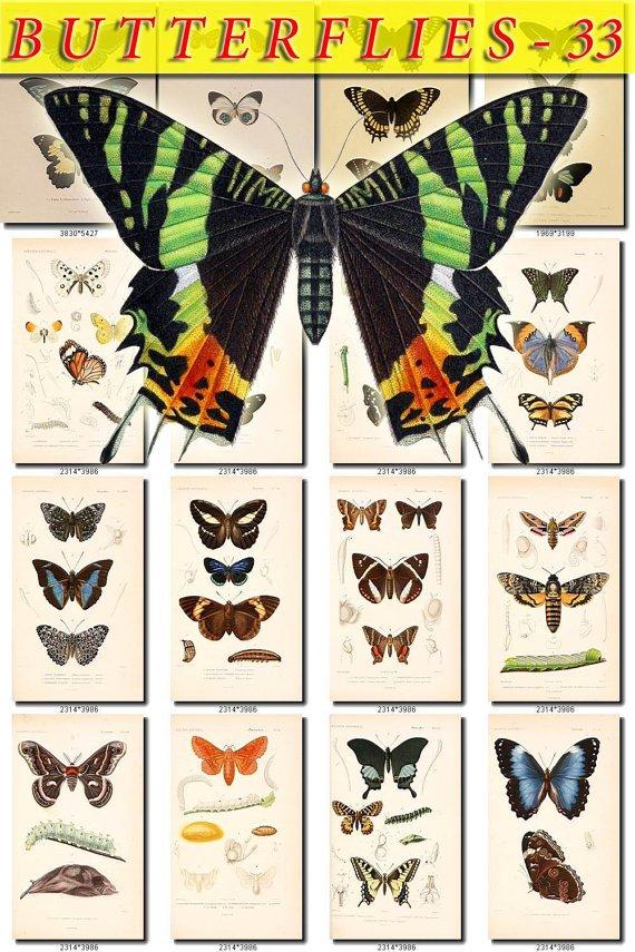 BUTTERFLIES-33 157 vintage print