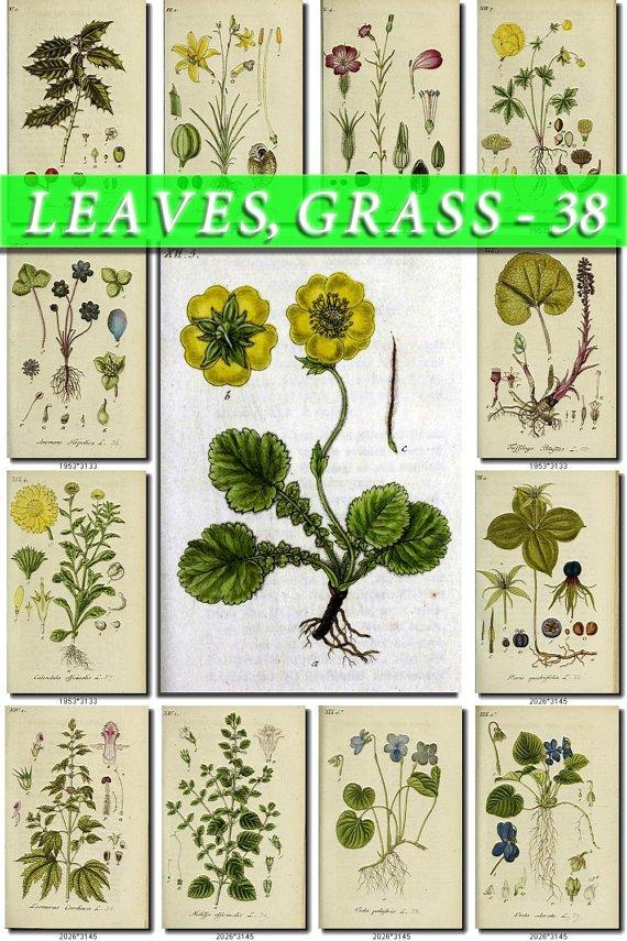 LEAVES GRASS-38 192 vintage print