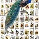 BIRDS BEST-1 365 most beautiful pictures vintage print