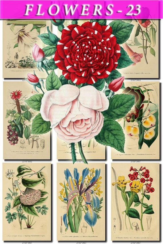 FLOWERS-23 79 vintage print