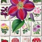 FLOWERS-42 64 vintage print