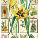 FLOWERS-80 253 vintage print