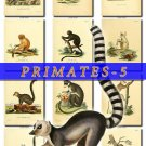 PRIMATES APES-5 62 vintage print