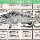 FISHES-35-bw 122 vintage print