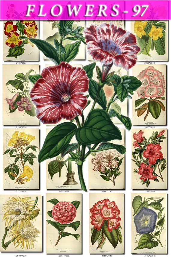 FLOWERS-97 290 vintage print