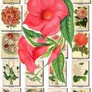 FLOWERS-113 263 vintage print