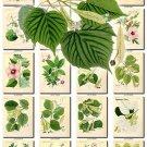 LEAVES GRASS-56 227 vintage print