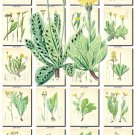 LEAVES GRASS-61 259 vintage print