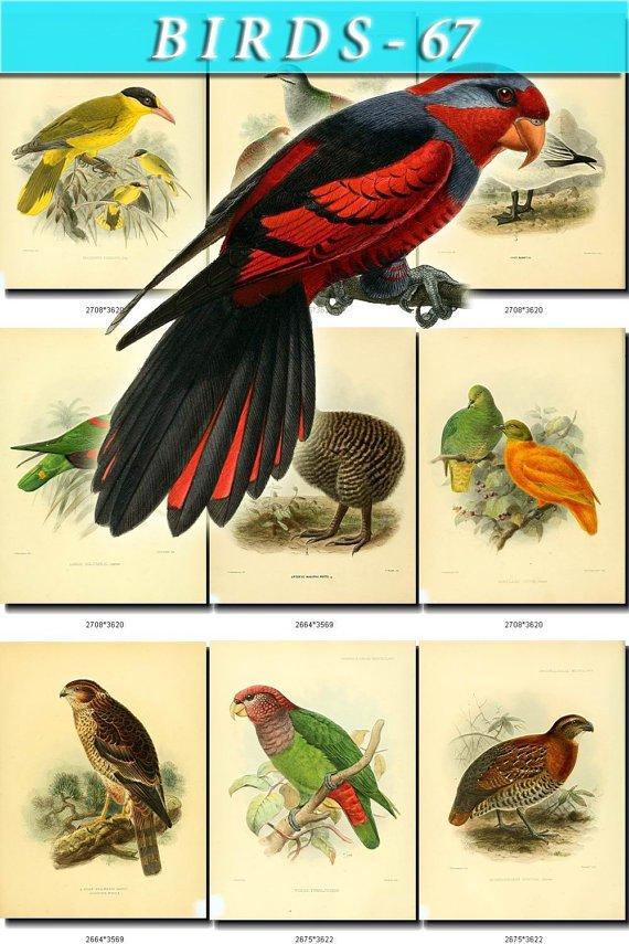BIRDS-67 80 vintage print