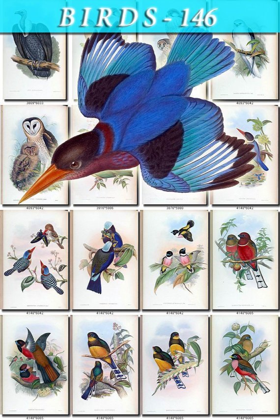 BIRDS-146 76 vintage print