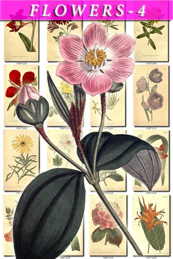 FLOWERS-4 216 vintage print