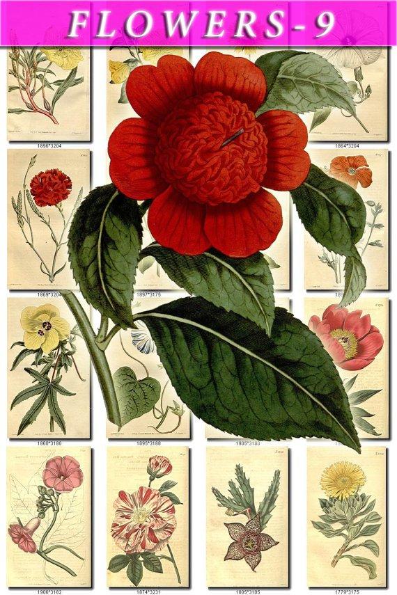 FLOWERS-9 271 vintage print