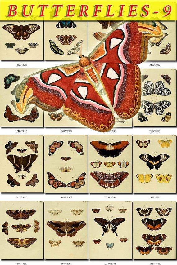 BUTTERFLIES-9 249 vintage print