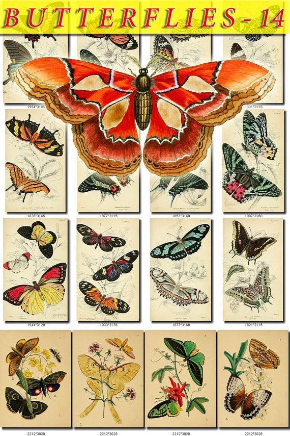 BUTTERFLIES-14 211 vintage print