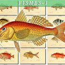 FISHES-1 124 vintage print
