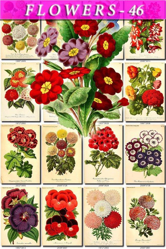 FLOWERS-46 68 vintage print