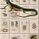 REPTILES & AMPHIBIAS-19 185 vintage print