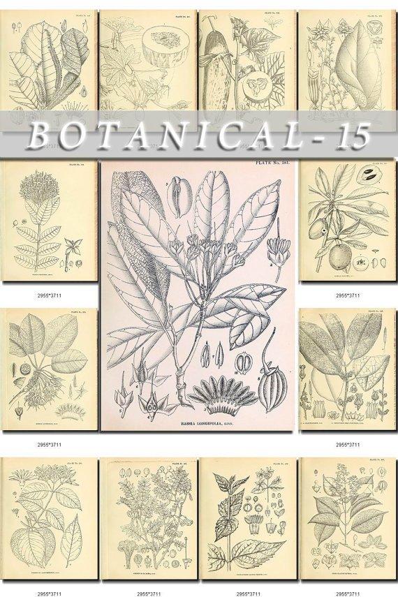 BOTANICAL-15-bw 243 black-, -white vintage print