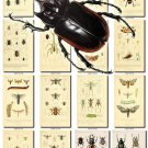 INSECTS-32 97 vintage print