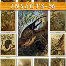 INSECTS-36 80 vintage print
