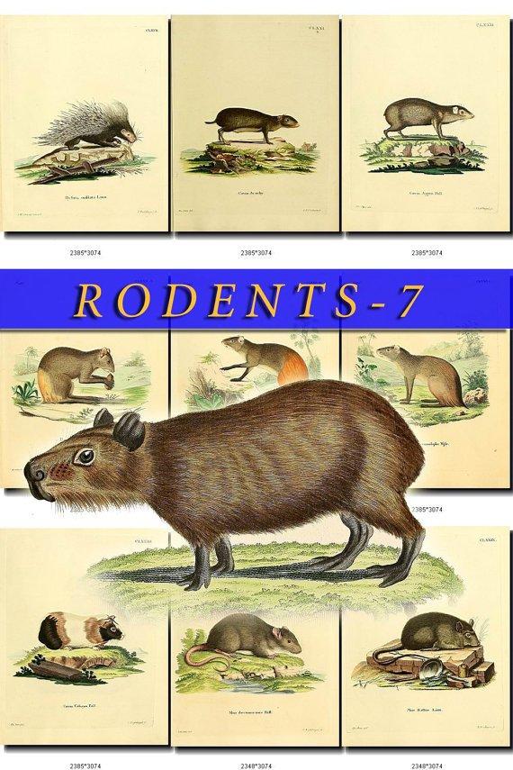 RODENTS-7 50 vintage print