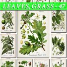 LEAVES GRASS-47 162 vintage print