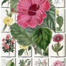FLOWERS-62 262 vintage print