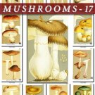 MUSHROOMS-17 271 vintage print