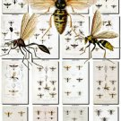 INSECTS-46 90 vintage print