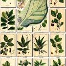 LEAVES GRASS-19 210 vintage print