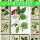 LEAVES GRASS-25 223 vintage print