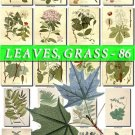 LEAVES GRASS-86 267 vintage print