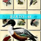 BIRDS-48 60 vintage print