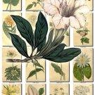 FLOWERS-10 246 vintage print