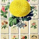 FLOWERS-32 74 vintage print