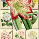 FLOWERS-41 69 vintage print