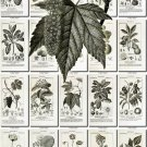 BOTANICAL-13-bw 333 black-, -white vintage print