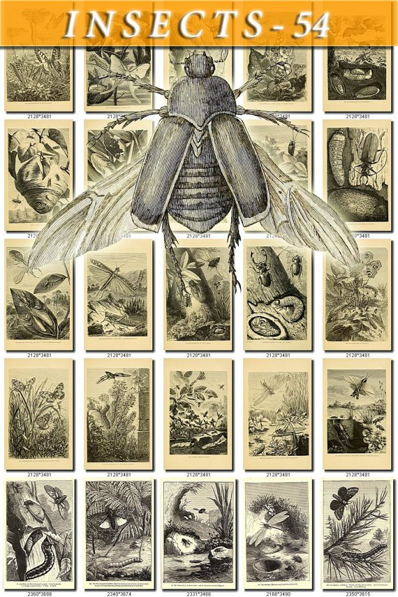 INSECTS-54-bw 262 vintage print
