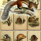 RODENTS-4 54 vintage print