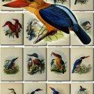BIRDS-163 191 vintage print