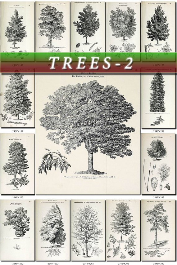 TREES-2-bw 198 vintage print