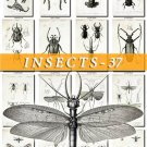 INSECTS-37-bw 132 vintage print
