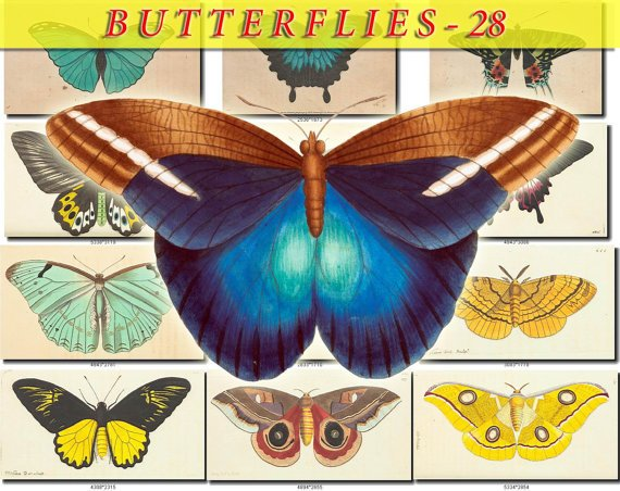 BUTTERFLIES-28 112 vintage print