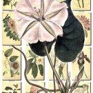 FLOWERS-5 282 vintage print